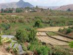 Reisfelder bei Isalo